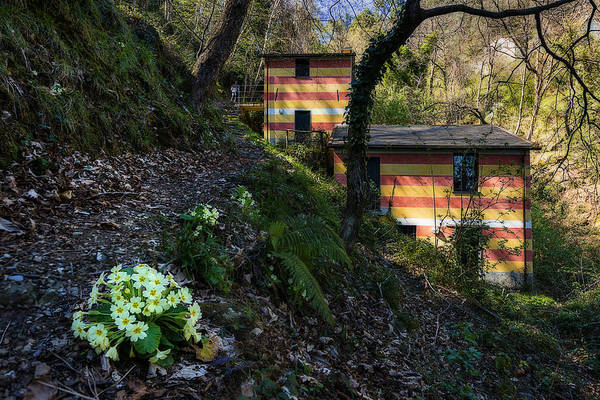 Photograph - Portofino Mills Valley Walk With Flowers by Enrico Pelos