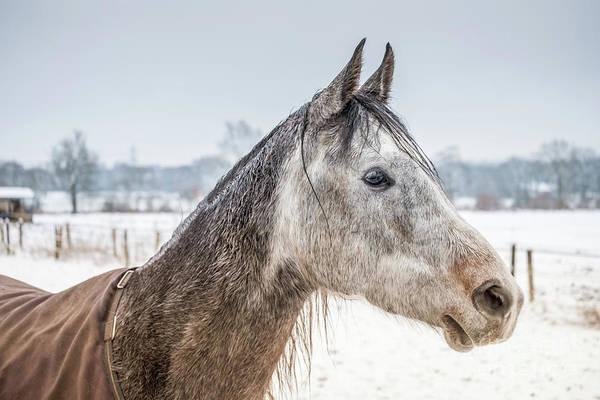 Photograph - Portrait Amigo by Marina Usmanskaya