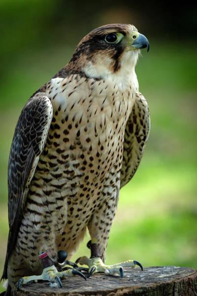 Photograph - Portrait Bird  by Cliff Norton