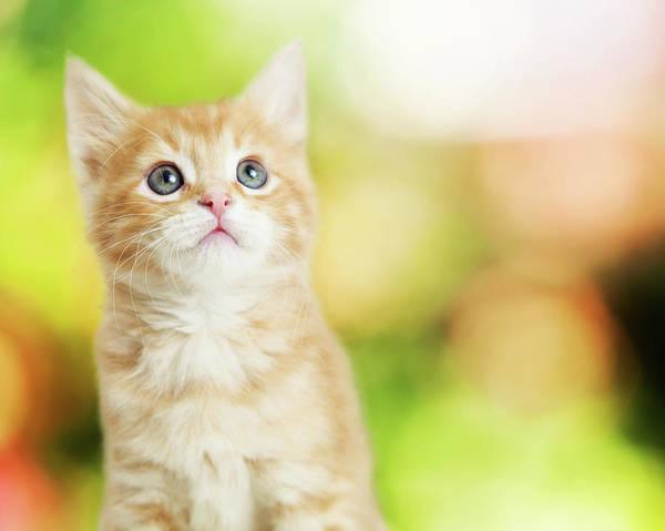 Photograph - Portrait Cute Kitten Blurred Scenic Background by Susan Schmitz