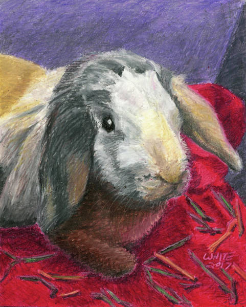 Pastel - Portrait Of A Bunny by Dominic White