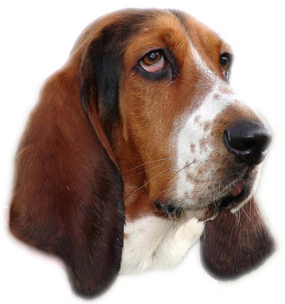 Hoodie Photograph - Portrait Of A Dog by George Atsametakis