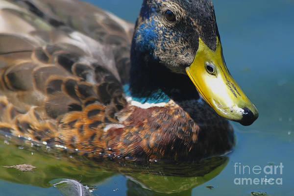 Photograph - Portrait Of A Duck by Jutta Maria Pusl