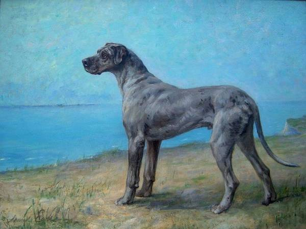 Painting - Portrait Of A Great Dane by Celestial Images
