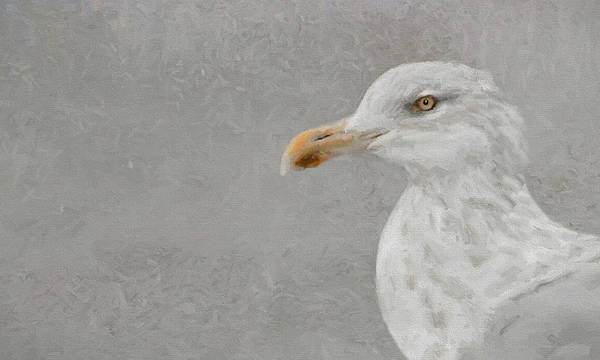 Photograph - Portrait Of A Gull by Karen Lynch