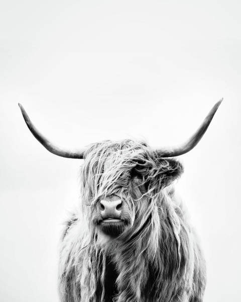Steer Photograph - Portrait Of A Highland Cow - Vertical Orientation by Dorit Fuhg