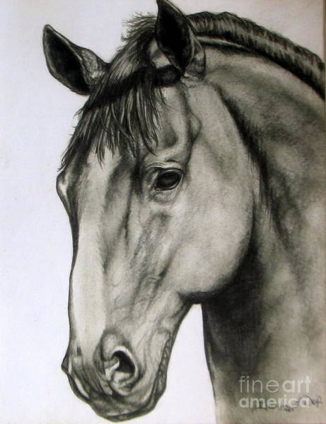 Drawing - Portrait Of A Horse by Georgia's Art Brush
