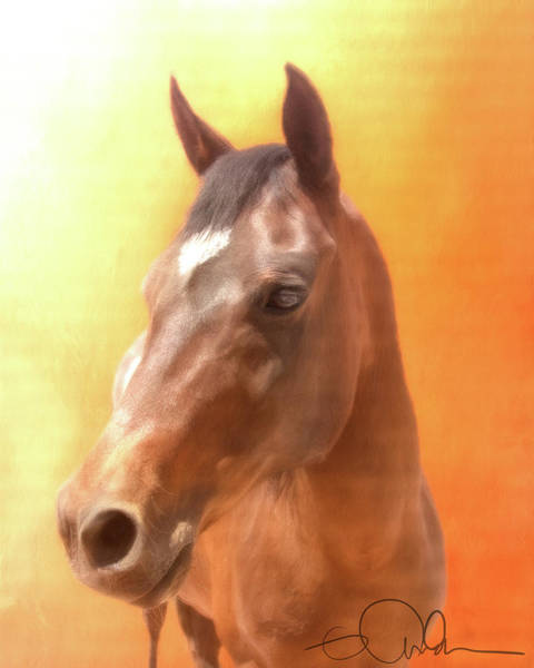 Digital Art - Portrait Of A Horse by Gloria Anderson