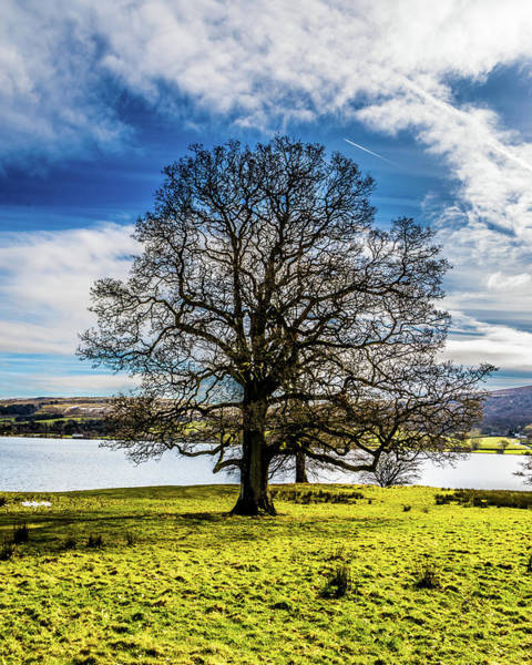 Pooley Bridge Wall Art - Photograph - Portrait Of A Lake District Tree by Naylors Photography
