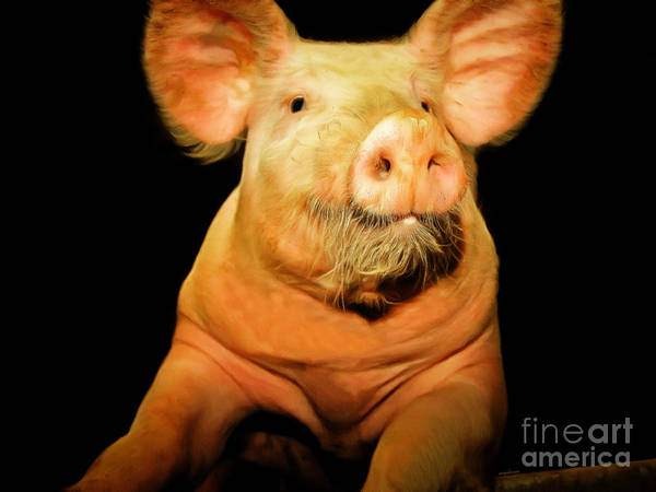 Photograph - Portrait Of A Pig 20170921 by Wingsdomain Art and Photography