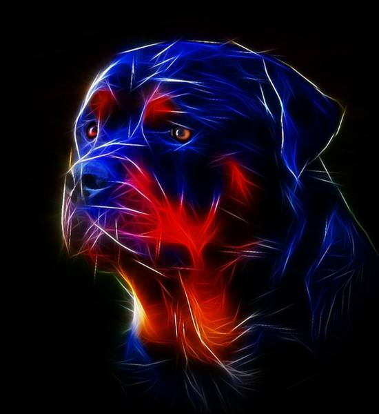Service Dog Photograph - Portrait Of Rottweiler by Alexey Bazhan