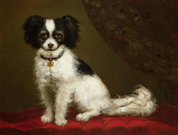 Wall Art - Painting - Portrait Of A Spaniel by Anonymous