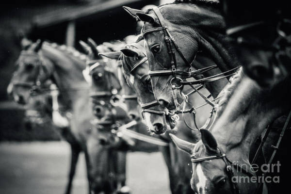 Photograph - Portrait Of A Sport Horses by Dimitar Hristov