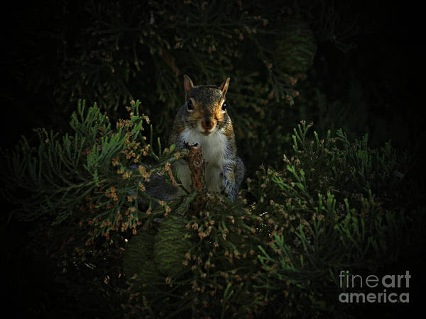 Photograph - Portrait Of A Squirrel by Lance Sheridan-Peel