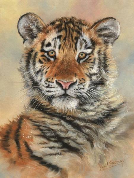 Siberian Tiger Wall Art - Painting - Portrait Of A Tiger Cub by David Stribbling