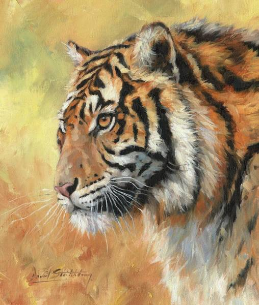 Bengal Tiger Painting - Portrait Of An Amur Tiger by David Stribbling