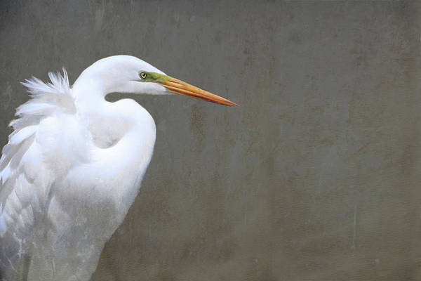 Portrait Of An Egret Rectangle Art Print