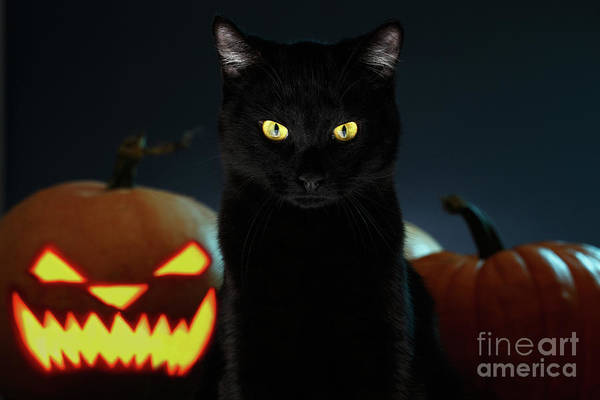 Photograph - Portrait Of Black Cat With Pumpkin On Halloween by Sergey Taran