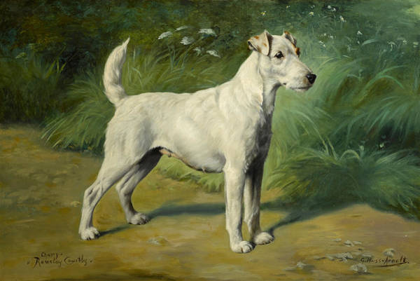 Whippet Wall Art - Painting - Portrait Of Champion Rowsley Courtly by Gustav Muss-Arnolt