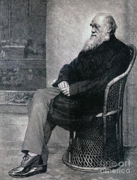 Theorist Wall Art - Drawing - Portrait Of Charles Darwin by American School