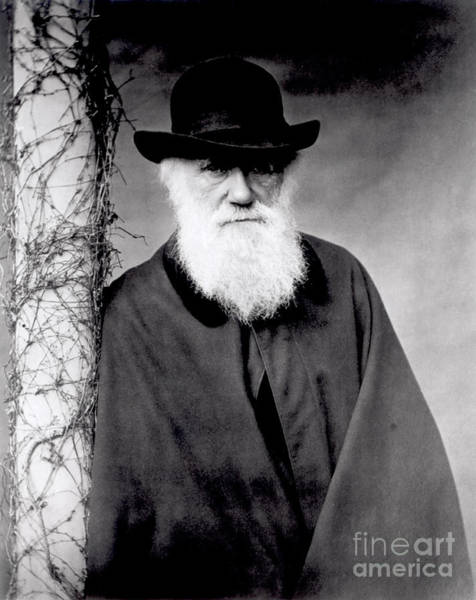 Evolution Wall Art - Photograph - Portrait Of Charles Darwin by Julia Margaret Cameron