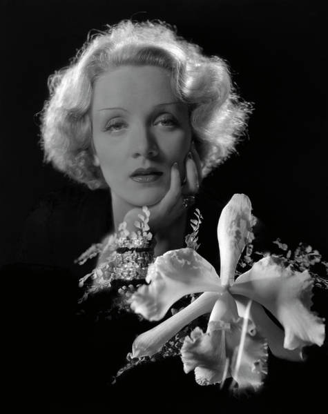 Flower Head Photograph - Portrait Of Marlene Dietrich by Cecil Beaton