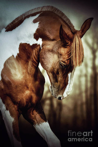Photograph - Portrait Of Paint Horse Stallion by Dimitar Hristov