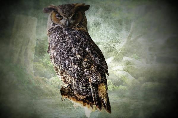 Digital Art - Portrait Of Perching Great Horned Owl by Rusty R Smith