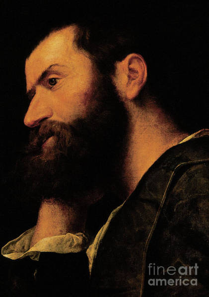 Compose Wall Art - Painting - Portrait Of The Poet Pietro Aretino by Alessandro Bonvicino Moretto