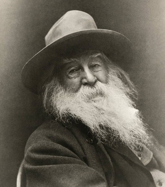 Wall Art - Photograph - Portrait Of Walt Whitman by George Cox