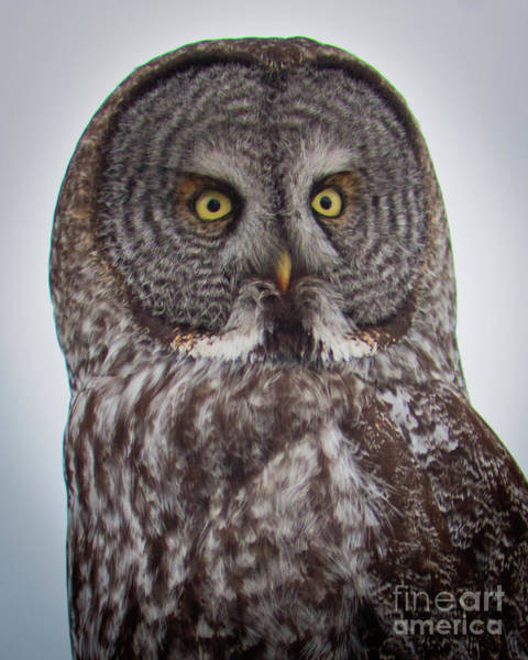 Photograph - Portrait Of Wisdom by Katie LaSalle-Lowery