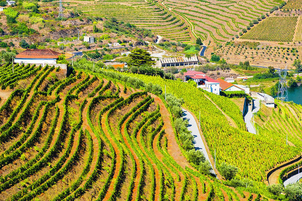 Wall Art - Photograph - Duoro Valley Vineyard Overview 2 - Portugal by Madeline Ellis