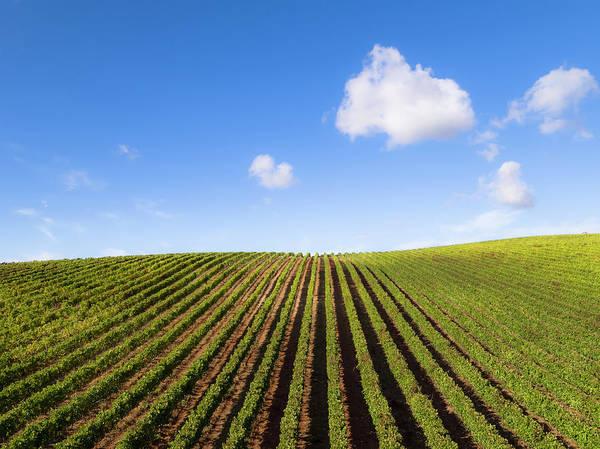 Photograph - Portugal Vineyards 02 by Edgar Laureano