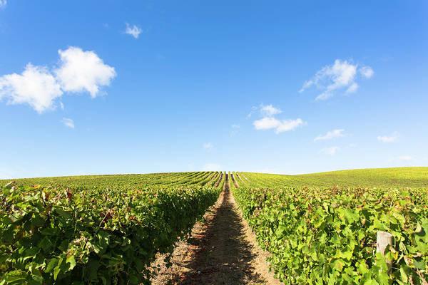 Photograph - Portugal Vineyards by Edgar Laureano