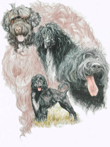 Mixed Media - Portuguese Water Dog Medley by Barbara Keith