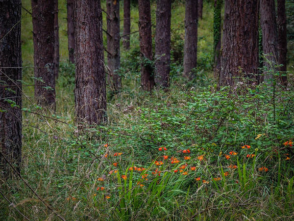 Photograph - Portumna Forest Park Paradise In County Galway by James Truett