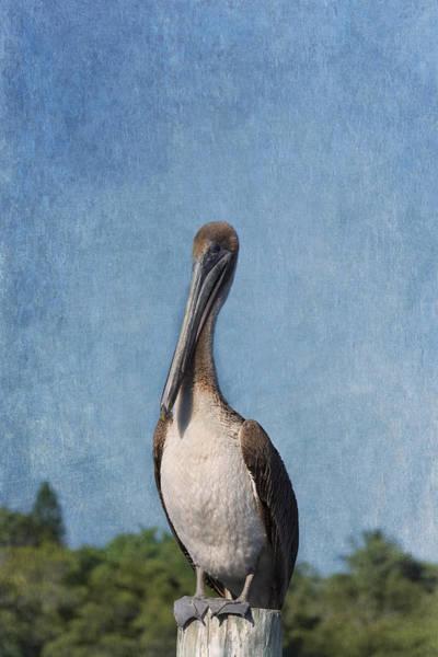 Wader Photograph - Posing Pelican by Kim Hojnacki