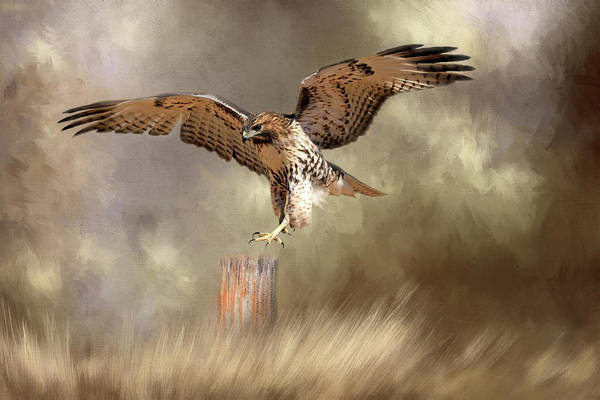 Wall Art - Photograph - Post Landing by Donna Kennedy
