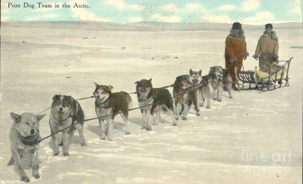 Painting - Postal Mail Prize Dog Team In The Arctic 1911 by Celestial Images