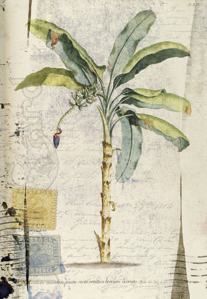 Correspondence Photograph - Postcard Banana Plant Botanical by Carol Leigh
