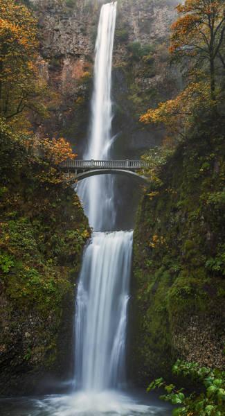 Photograph - Postcard From Oregon by Loree Johnson