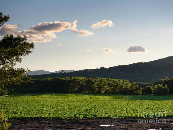 Photograph - Potato Field, Rumford, Maine #00266 by John Bald