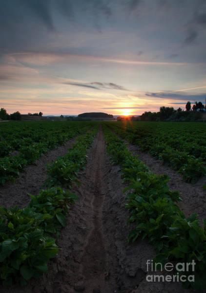 Potato Photograph - Potato Field Sunset by Mike Dawson