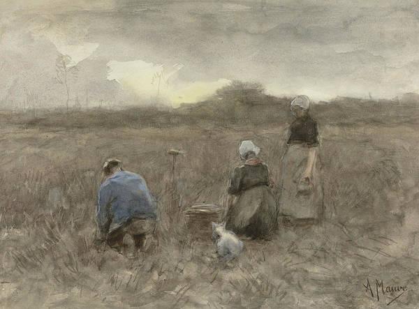 Potato Painting - Potato Harvesters by Anton Mauve