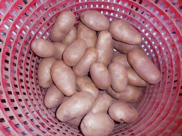 Protein Painting - Potatoes In Basket  by Jeelan Clark