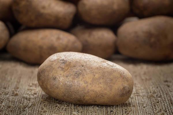 Potato Photograph - Potatoes by Steve Gadomski