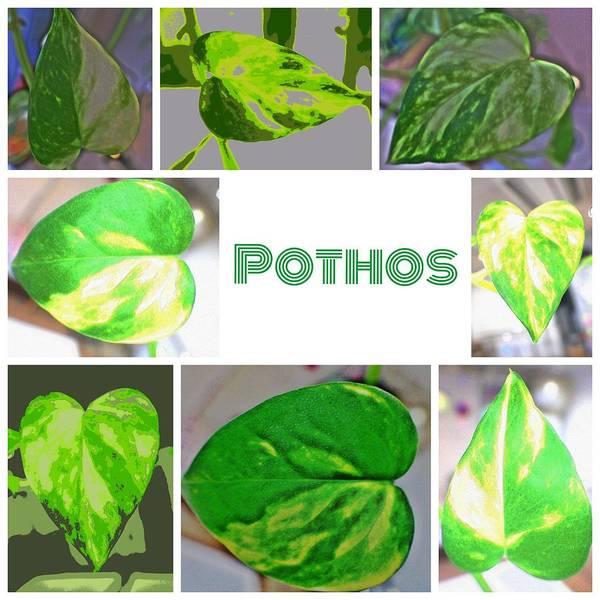 Green Digital Art - Pothos by Kumiko Izumi