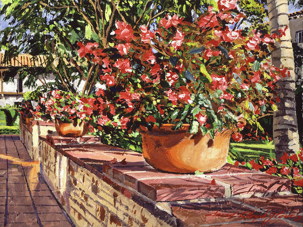 Containers Painting - Potted Begonias Santa Barbara by David Lloyd Glover