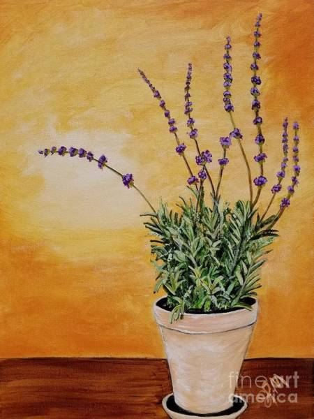 Painting - Potted Lavender  by Shawn Christopher Mooney