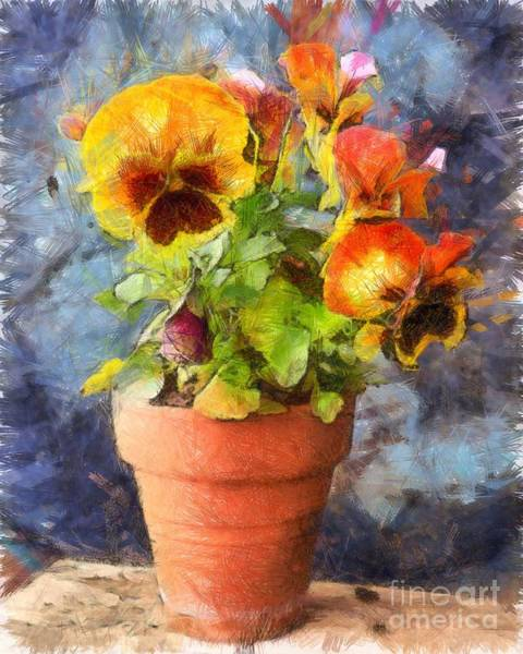 Clay Pot Photograph - Potted Pansy Pencil by Edward Fielding